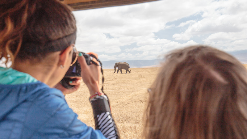 A young woman photographs an elephant on an African safari
