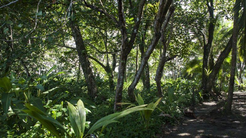 Hiking trail through Sarapiqui