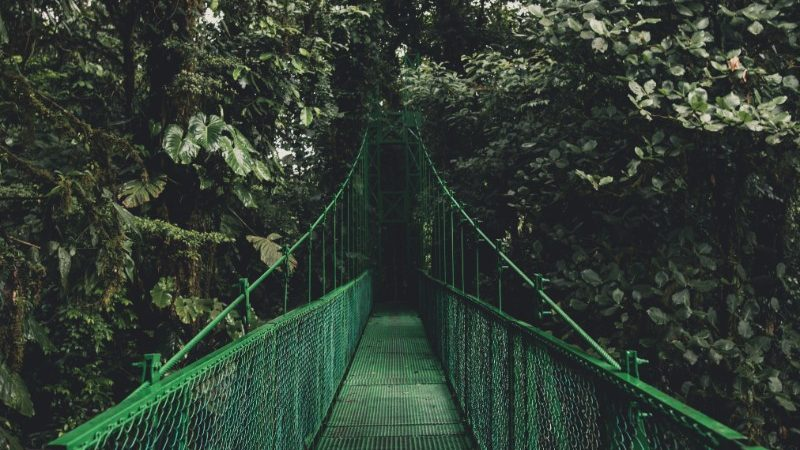 A walkway in the cloud forest, Monteverde