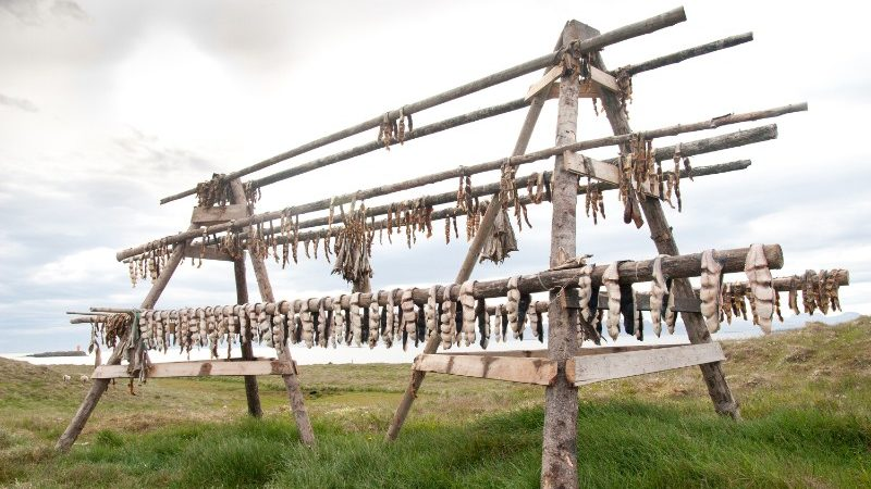 A rack covered in dried fish in the Icelandic countryside