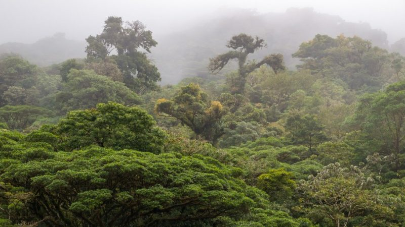 Cloud Forest, Monteverde