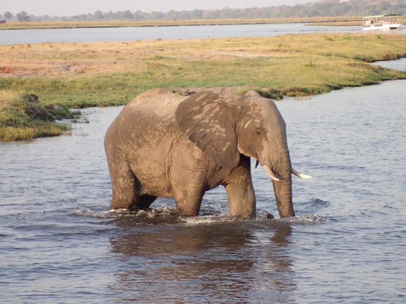 Southern Africa safari Botswana elephant