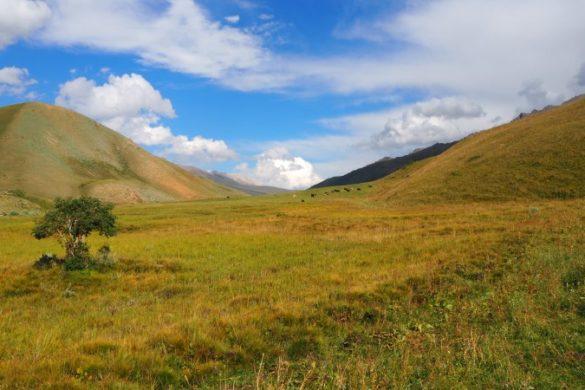Pastures near Son Kul