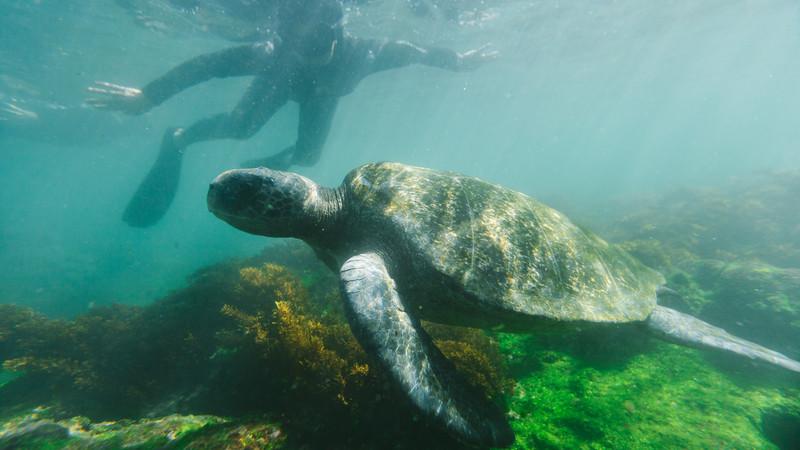 Active Galapagos