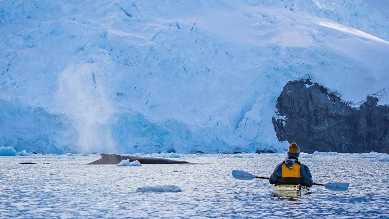 A whale and a kayaker in Antarctica