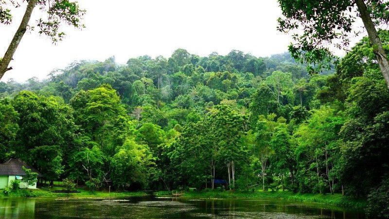 Khao Phra Thaeo National Park, Thailand