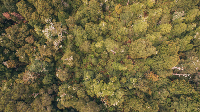 A drone shot of the Tarkine Rainforest