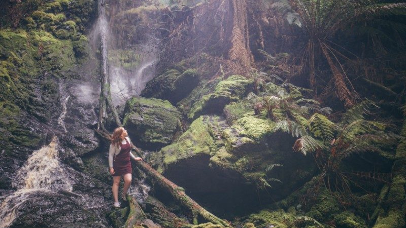 A traveller in the Tarkine Rainforest