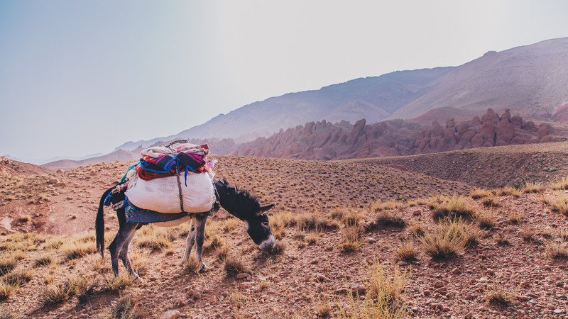 Moroccan Berber Nomad trail