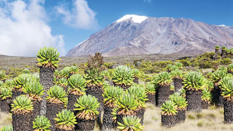 Kilimanjaro. Tanzania