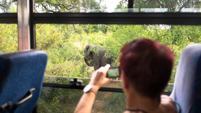 A traveller takes a photo of an elephant