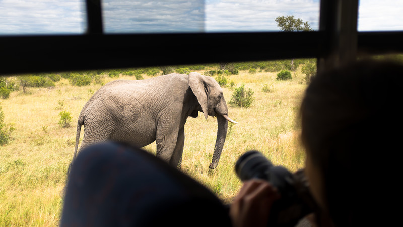 Elephant in Kruger NP