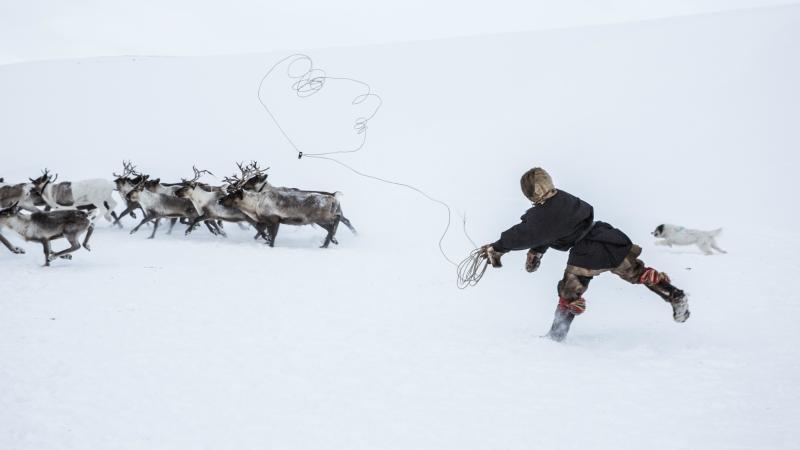 Nenet reindeer herders in Siberia, Russia