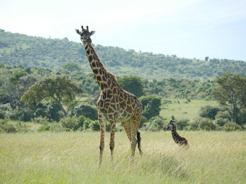 Kenya family safari