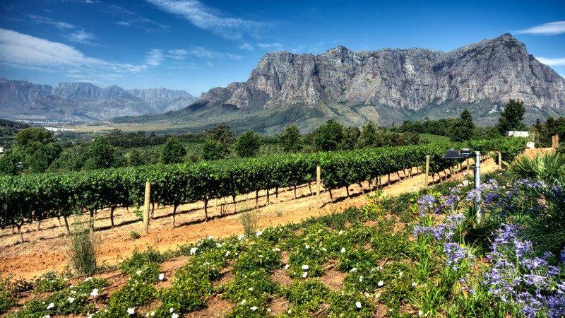 Beautiful winery in Stellenbosch