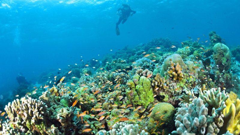 Diving in Sipadan, Malaysia