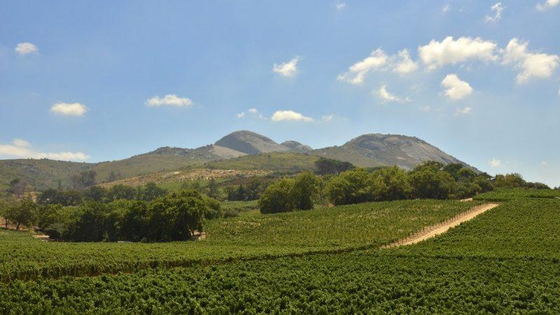 Vineyards in Paarl, South Africa