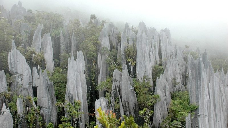 The Pinnacles, Gunung Mulu NP Malaysia