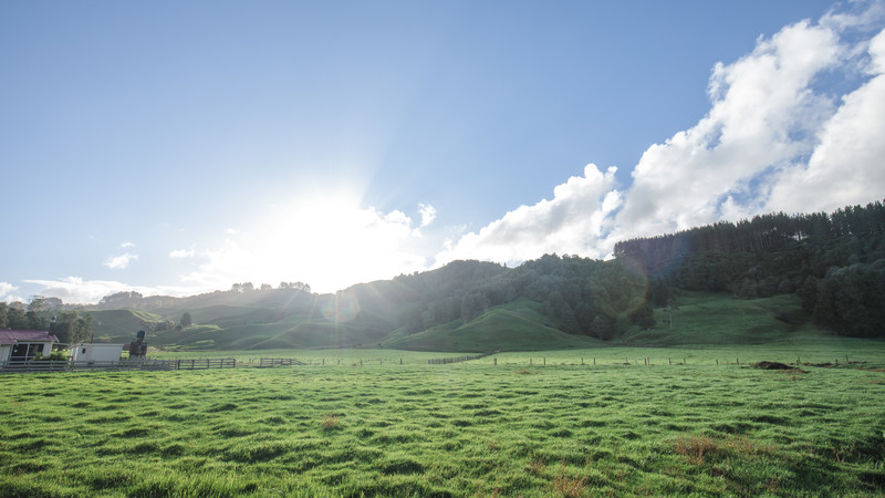 Field above caves in Waitomo