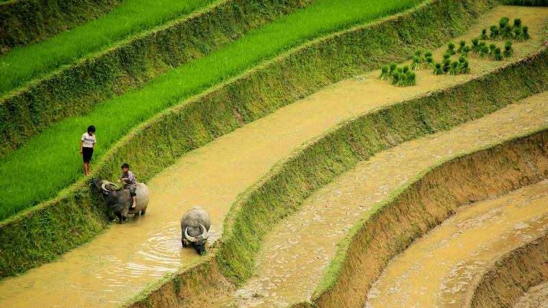 Kids playing in the rice paddies in Sapa, Vietnam
