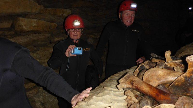 Mammal bones in Waitomo cave