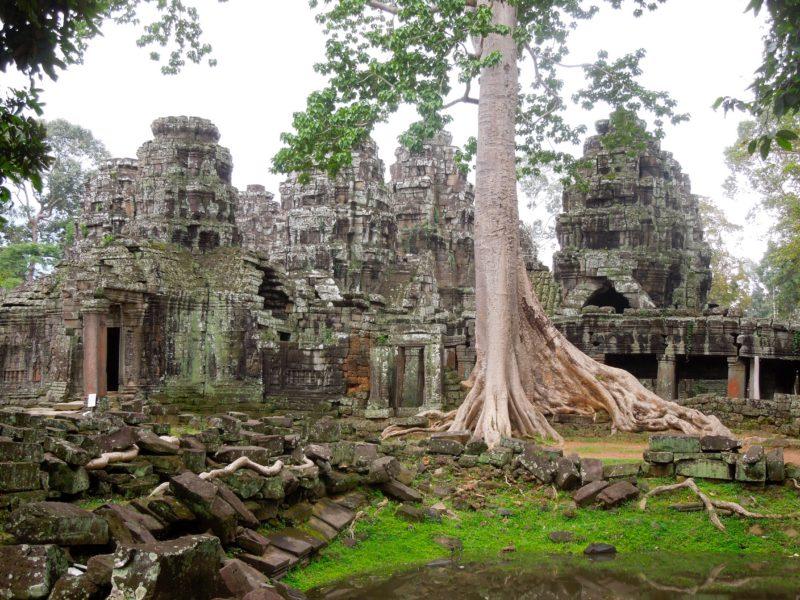 Angkor Wat guide Ta Prohm