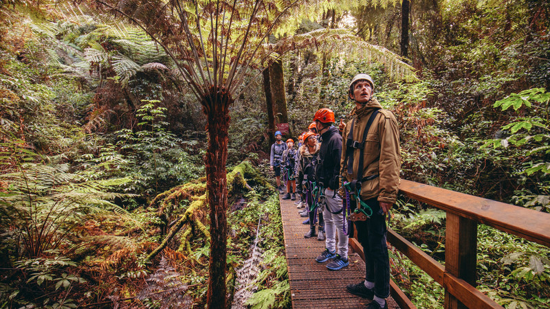 Travellers in Rotorua forest Canopy tour
