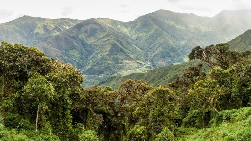 Cloud forest in Podocarpus National Park