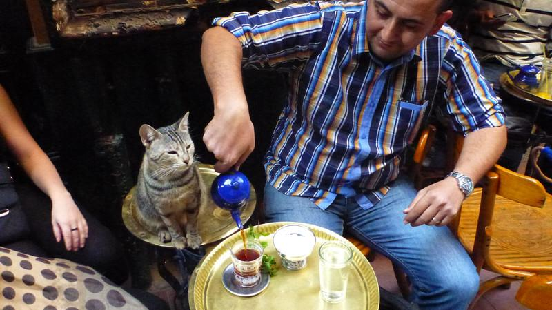 A man drinking tea with a cat