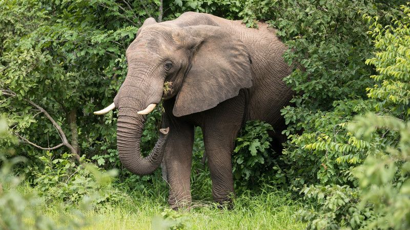 An elephant in Zimbabwe