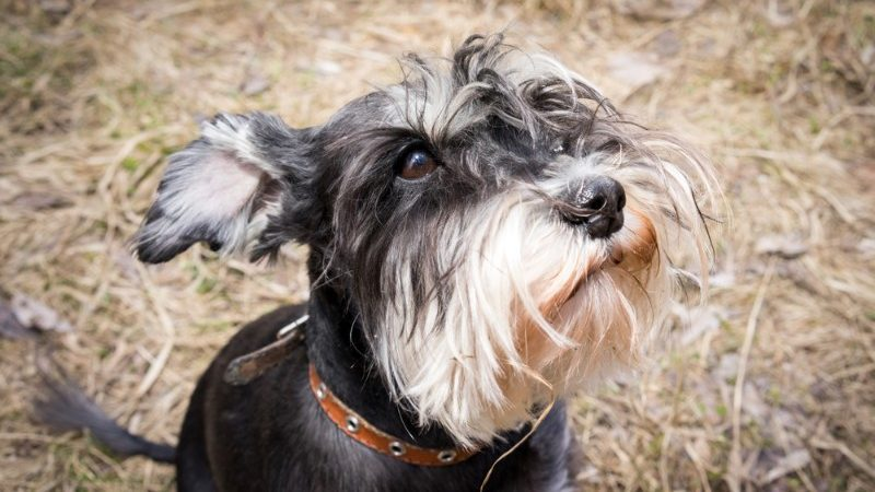 16 animals that have better beards than you
