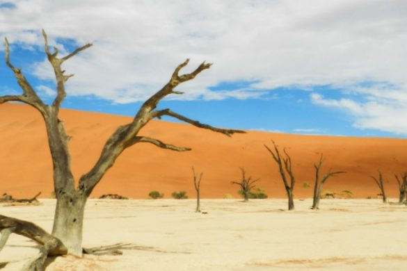 Skeletal trees in Namibia