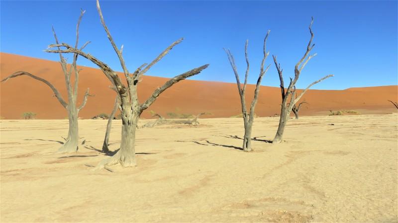 Deadvlei Namibia travel