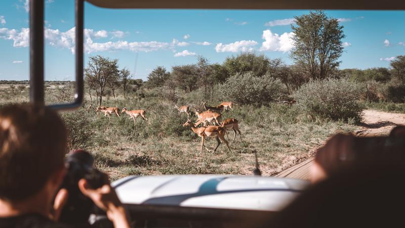 A safari in Botswana