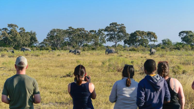 Travellers taking photos of elephants in Botswana