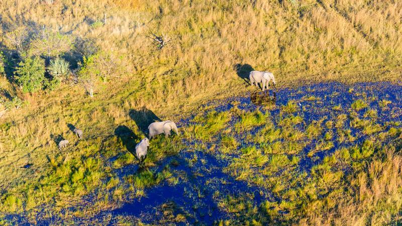 A birds-eye-view of elephants in Botswana
