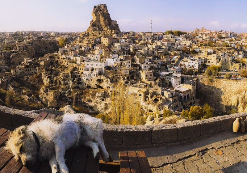 A dog lying on a table with Ortahisar Castle in the background
