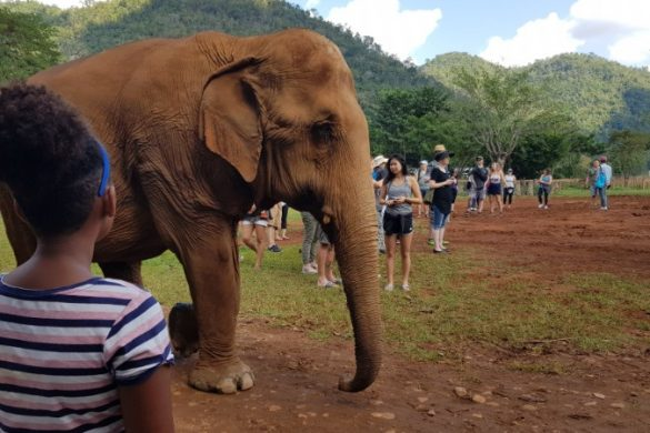 A girl looks at an elephant