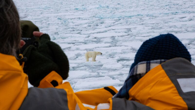 People watching a polar bear on the ice