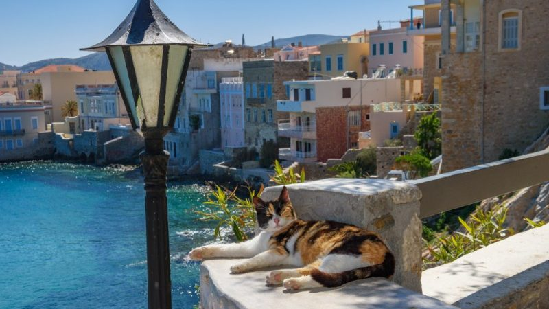 A cat lying on a wall next to a map post in Greece