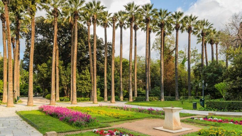 Palm trees and flowers in the National Garden, Athens