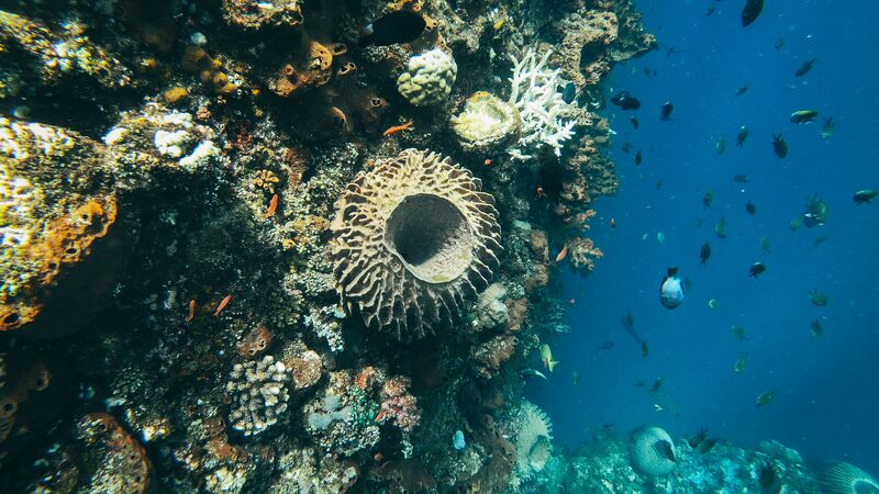 Coral in Amed, Bali.