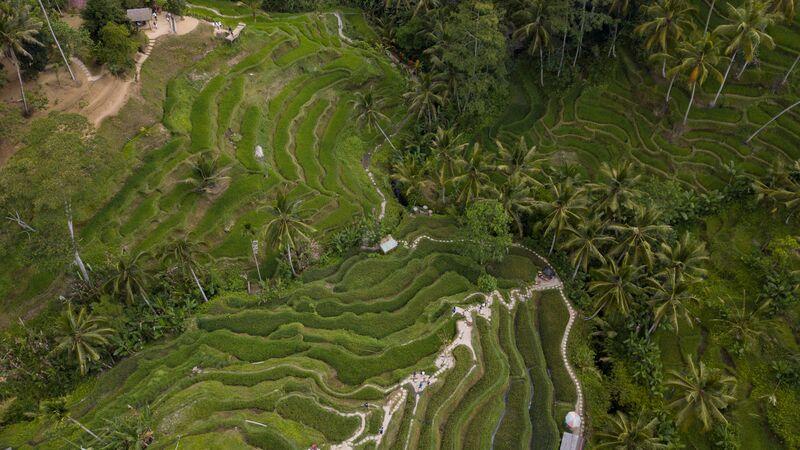 Aerial shot of Bali's beautiful rice terraces.