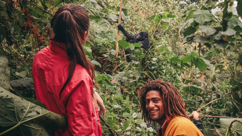 Two hikers watch a gorilla in Uganda.