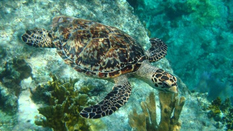Image result for 8 Reasons to Visit Trinidad and Tobago Responsible turtle watching