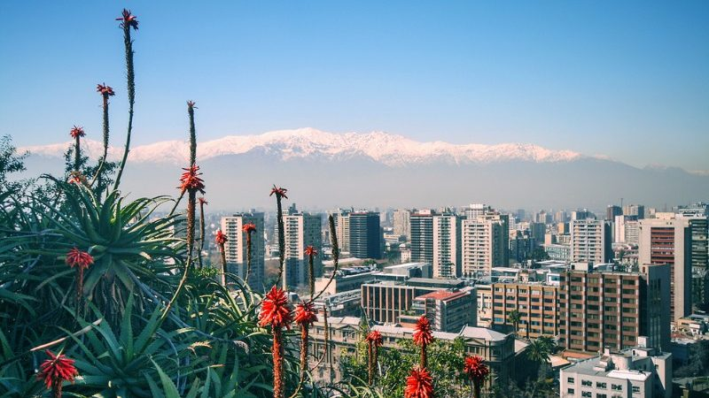 View of Santiago with flowers in the foreground