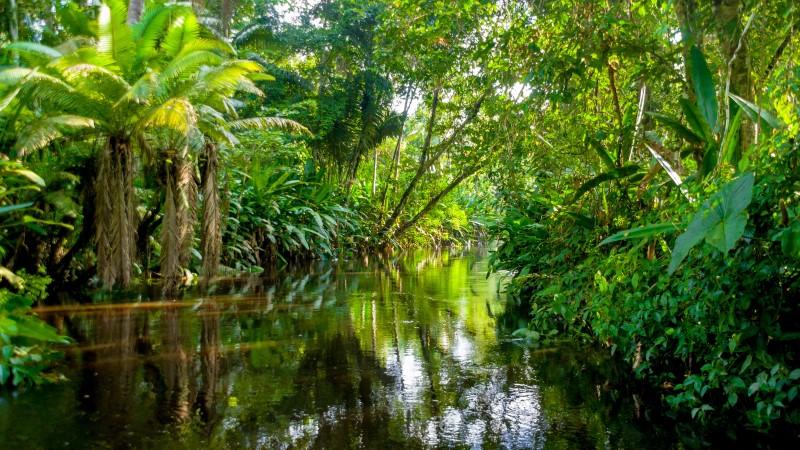 A submerged area of the Amazon in Ecuador