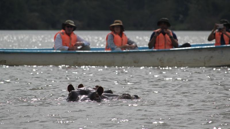 hippos in Lake Naivasha and people behind them on a boat on a Kenya safari