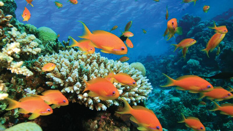 fish swimming in Red Sea