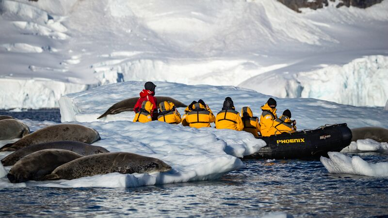Travellers kayaking near seals in Antarctica